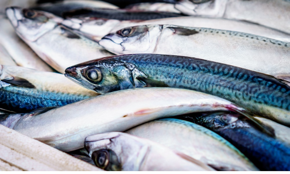 fishing-in-baja-california